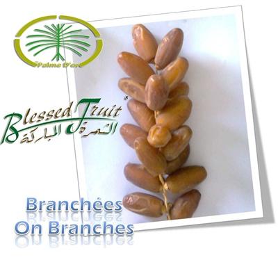 شراء Dattes Branchées