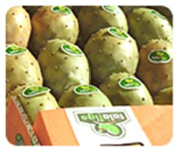شراء Fresh Prickly Pear