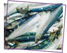 شراء Poisson bleu (la Sardine)
