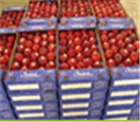 شراء Nectarine