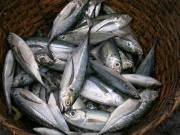 شراء Sardines congelés