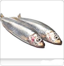 شراء Sardines