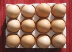 Production oeufs