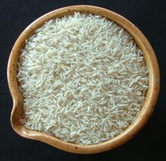 حبوب الأرز الطويل