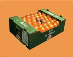 L'orange Maltaise demi-sanguine